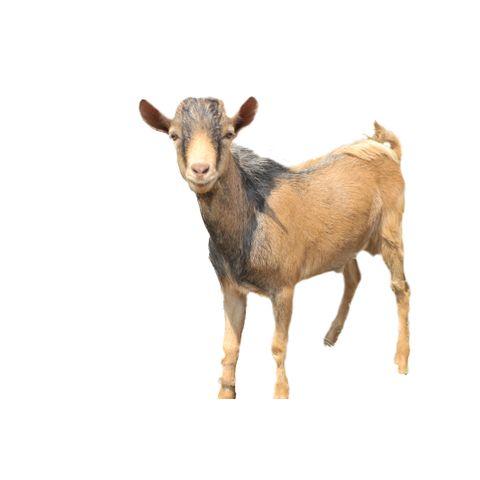 Koza pro Rwandu